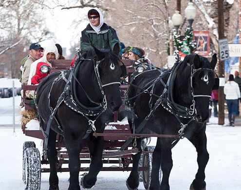 Sleigh Ride at Old South Pearl Street Winterfest Festival